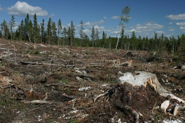 NMU Student Study Shows Michigan's Proposal 3 May Lead to Deforestation