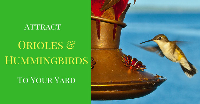 Attract Hummingbirds and Orioles to Your Cottage
